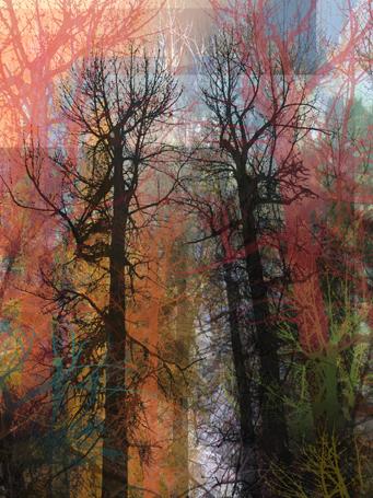 O'Brien Creek Trees
