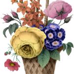 Honfleur Bouquet