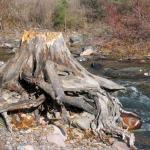 Rattlesnake Creek 4
