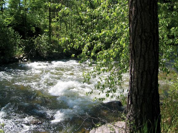 Rattlesnake Creek 5